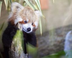 """And your parents, how are they?"" 