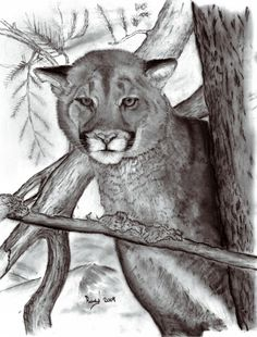 Cougar in Tree