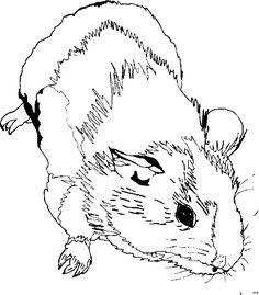 maulwurf | ausmalbilder tiere, ausmalen