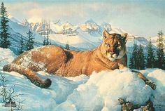Wildlife Paintings, Wildlife Art, Scratchboard Art, American Animals, Lion Art, Landscape Pictures, Fauna, Cat Art, Lions