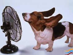Oh, did we mention it's gonna be H-A-W-T today? 105 or if this helps...40.5 Celsius. Let's all be like the dawg & stay cool