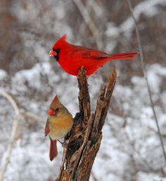 Finch family  #birds