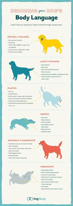 Decoding Your Dog's Body Language in Any Situation Everything you need to know about beagles Training Your Puppy, Dog Training Tips, Potty Training, Training School, Training Classes, Training Videos, Pet Sitter, Dog Body Language, Dog Minding