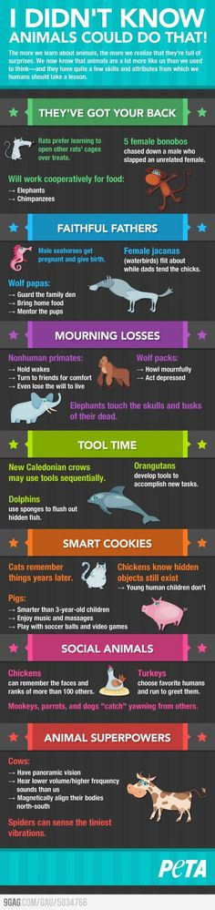 Didn't Know Animals Could Do That!  #infographics #animals #emotions