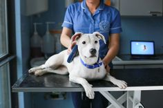 Learn all the benefits of microchipping your pet. Get the facts about microchipping to protect your dog from being lost or stolen.
