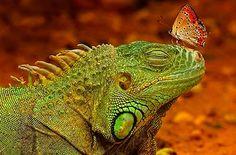 Amazing animal pics