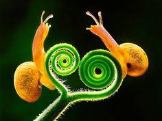 """Amazing Photo - """"Is that as far as Escargot?"""" he he"""