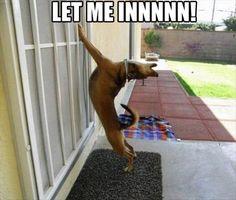 Let me iiiiiinnnnn!!!!