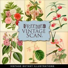 Far Far Hill - Free database of digital illustrations and papers: New Freebies Kit of Vintage Botany Illustrations