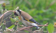 Got some great photos of a beautiful bird sitting and enjoying themselves in my garden