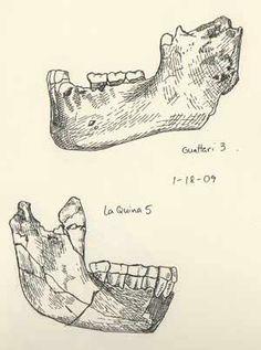 john hawks  paleoanthropology, genetics and evolution --his sketchbook.. very cool!