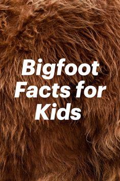 Weird Animal Facts, Animal Facts For Kids, Fun Facts For Kids, Fun Facts About Animals, Bigfoot Toys, Bigfoot Movies, Bigfoot Sasquatch, Real Bigfoot Pictures, Bigfoot Photos