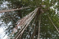 Indonesian tree by Adolfo Perez Coronado Dont Disturb, Utility Pole
