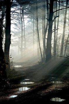 """Suddenly a mist fell from my eyes and I knew the way I had to take."" Edvard Grieg"