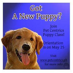 http://www.petcentrics.ph/2013/04/june-2013-puppy-class-open-for.html