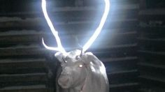 Reindeer herders in Finland are experimenting with reflective spray to help prevent auto collisions.