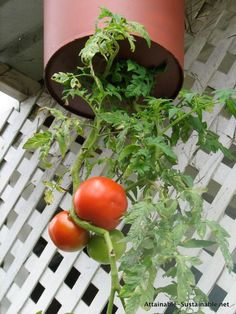 I came up with an alternative plan to utilize the space: upside down tomatoes. You've seen those Topsy Turvy contraptions, right? I decided to create one of my own with a bucket I had on hand to see how well it works. It took about two hours, including paint drying time. If you're not painting, you're looking at 20 minutes or so.
