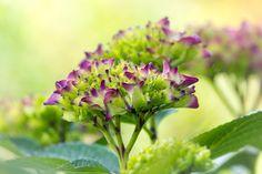 Beginner Blooms by Sarah Verkaik on 500px