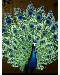 Cross Stitch Peacock Portrait by Mystic Stitch