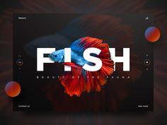 Fish UI by Vladimir Biondic - Dribbble