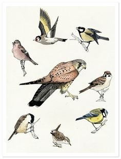 Picture of Bird Sketches claire scully