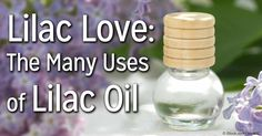 Discover the many uses and benefits of the fragrant lilac oil, and why this is a great essential oil to have at home. http://articles.mercola.com/herbal-oils/lilac-oil.aspx
