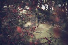 source: < http://atraversso.tumblr.com/ >