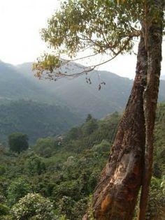 Guatemala Huehuetenango FVH El Bosque