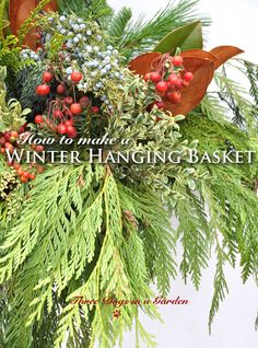 hanging baskets Three Dogs in a Garden: How to make a Winter Hanging Basket Christmas Hanging Baskets, Outdoor Christmas Planters, Plants For Hanging Baskets, Outdoor Wreaths, Outdoor Christmas Decorations, Baskets On Wall, Christmas Urns, Winter Decorations, Natural Christmas
