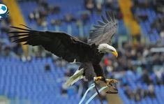 Eagle Tattoo Forearm, Forearm Tattoos, Bald Eagle, Hawaii, Bird, Wall Art, Animals, Tattoos On Forearm, Animales