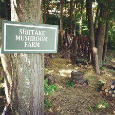 Claudia's Shiitake Mushroom Farm   The Tyler Place Family Resort, Highgate Springs, Vermont