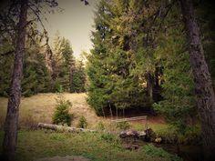 Virgin Forest of Elatia, Greece Greece, Country Roads, Mountains, Greece Country, Bergen
