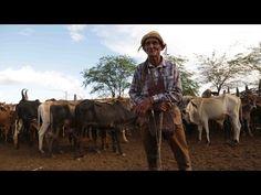 A Morte do Vaqueiro (Raimundo Jacó) - Luiz Gonzaga [Clipe Oficial] - YouTube
