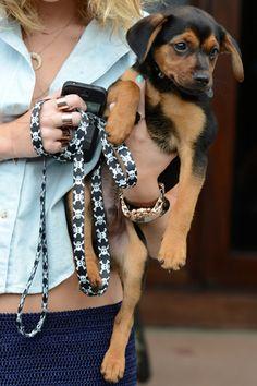 Rottweiler-Beagle mix!  Tiners