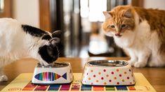 Cat Supplies White Original Dylan Kendall Ceramic Cat Or Dog Bowl Large