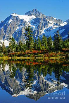 Autumn Reflections on Picture Lake - Mt. Shuksan, Washington, USA