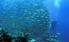 Diving in Curacao - Santa Barbara Beach and Golf Resort #CaribbeanTravel #Curacao #diving #Adventure