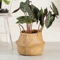 Mercury Row Seagrass Wicker Basket Color: Natural, Size: H x W x D Fabric Storage Bins, Fabric Bins, Storage Baskets, Easy Storage, Belly Basket, Etagere Bookcase, Boho Home, Rattan Basket, Basket Decoration