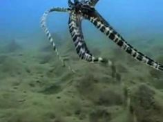 Octopus Video - fends off attackers by changing color or conforming appearance to a predator.  Amazing to watch.