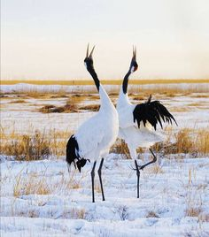 All Animals Pictures, Bird Pictures, Pictures To Paint, Nature Animals, Animals And Pets, Cute Animals, Most Beautiful Birds, Pretty Birds, Photography Words