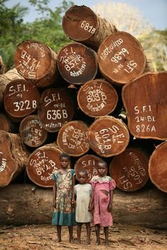 Children stand in front of a pile of highly valued Afromosia that is waiting to be transported.