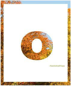 Lowercase letter o | autumn leaves | fall leaves #fall #autumn #alphabet #typography #initial #monogram #font
