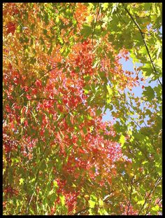Autumn Palette, Ste Adele, Quebec, Canada Copyright: Catherine Li