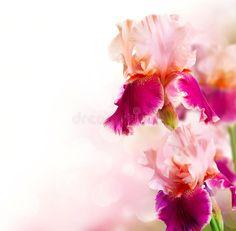 paintings of iris flowers - Yahoo Image Search Results Art Design, Artwork Design, Iris Flowers, Beautiful Flowers, Beautiful Flower Drawings, Flower Artwork, Work Inspiration, Royalty Free Photos, Bloom