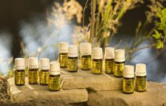 Essential Oils in the Bible         http://www.rebeccaatthewell.org/store/products/anointing-breaks-the-yoke/