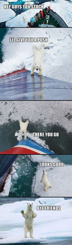 Thanks Bear - funny pictures #funnypictures