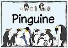 "Ideenreise: Themenplakat ""Pinguine"""