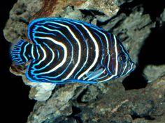 photos of ocean creatures Saltwater Aquarium Beginner, Saltwater Fish Tanks, Saltwater Lures, Deep Sea 3d, Deep Blue, Lego Avengers, Coral Reef Animals, Creature Picture, Fauna Marina