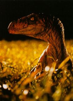 The Lost World Jurassic Park animatronic Velociraptor