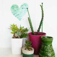 Cactus... succulent ...foraged vignette